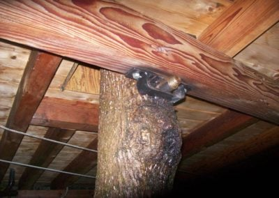 Serendipitree Treehouse
