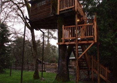 serendipitree_13 - Treehouse