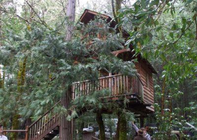 serendipitree_16 - Treehouse