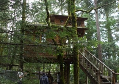 serendipitree_18 - Treehouse