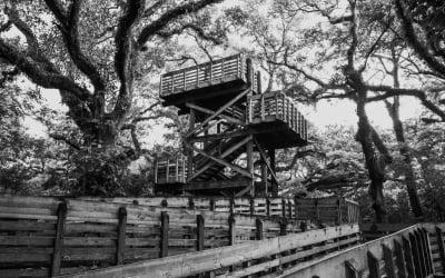 Unique Building Projects:  Design a Tree House
