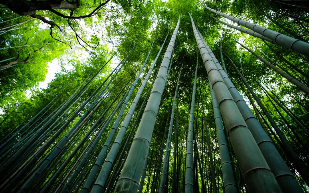 Is Bamboo Stronger Than Concrete?